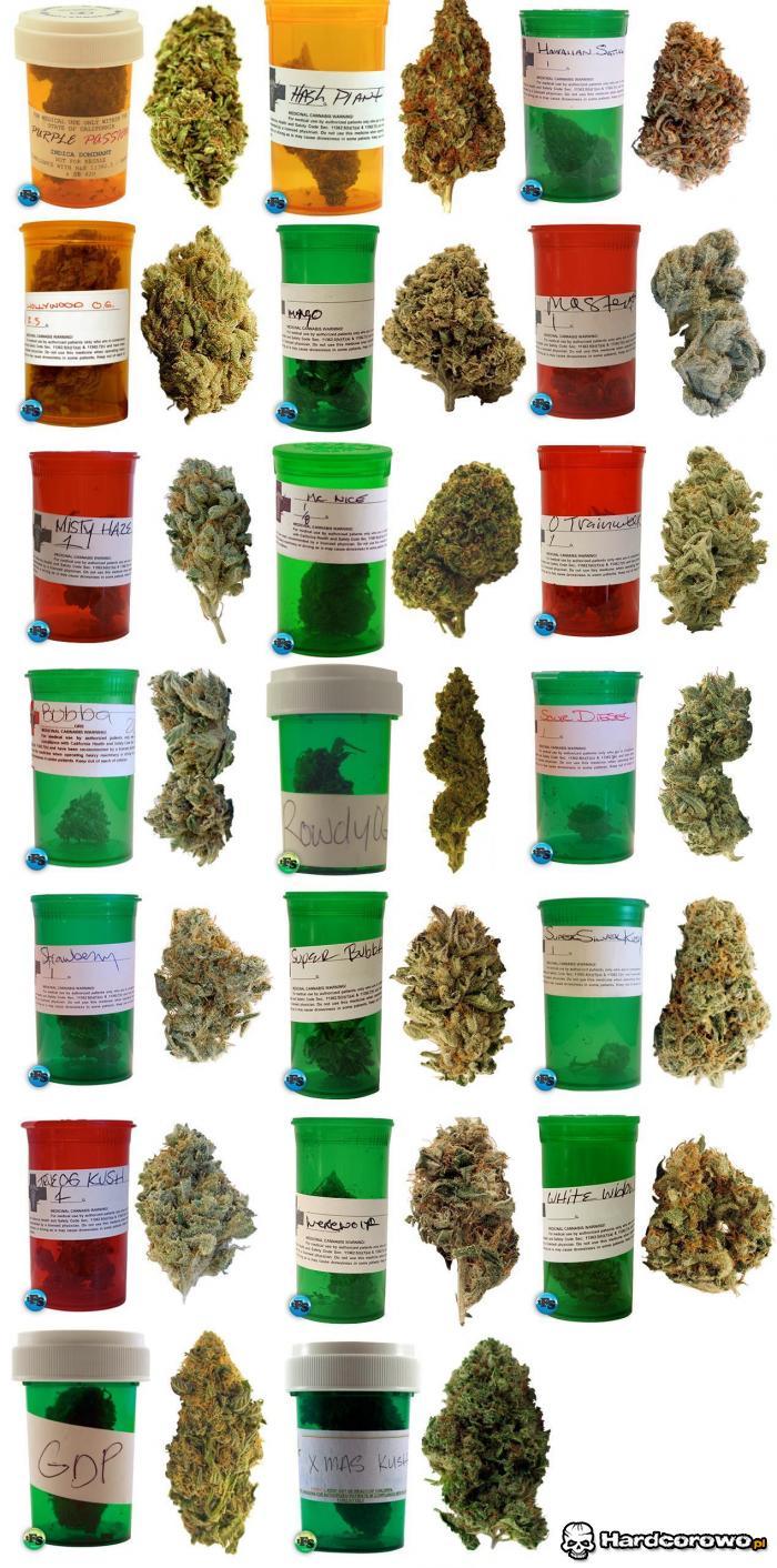 Lekarstwa - 1