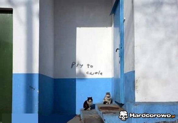 Bojówka kotów - 1