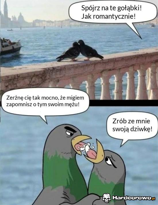 Gruchające gołębie - 1