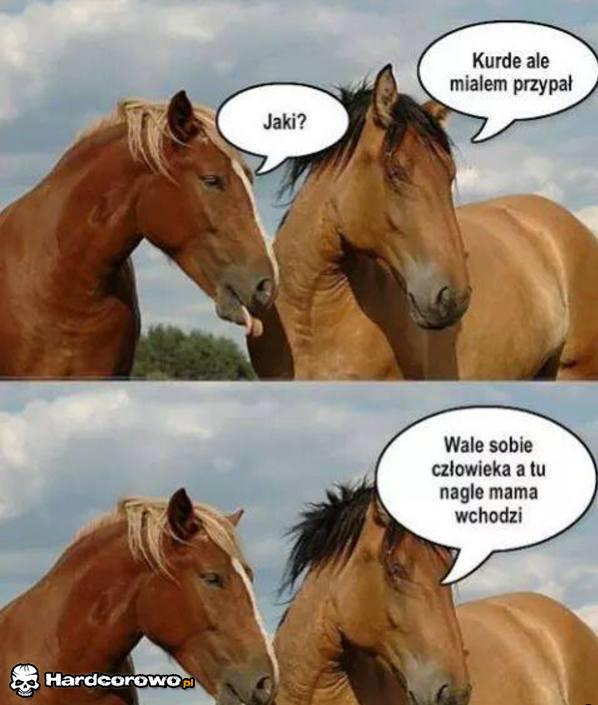 Przypał konia - 1