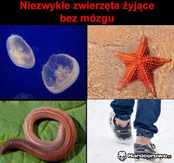 Bezmózgowce - 1