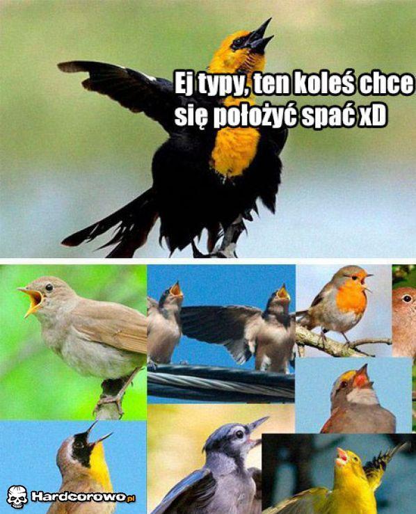 Ptaki takie są - 1