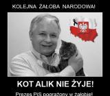 Kot Alik nie żyje!