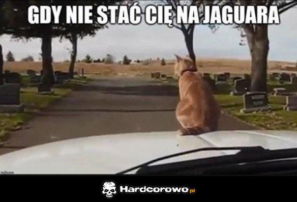 Jaguar - 1