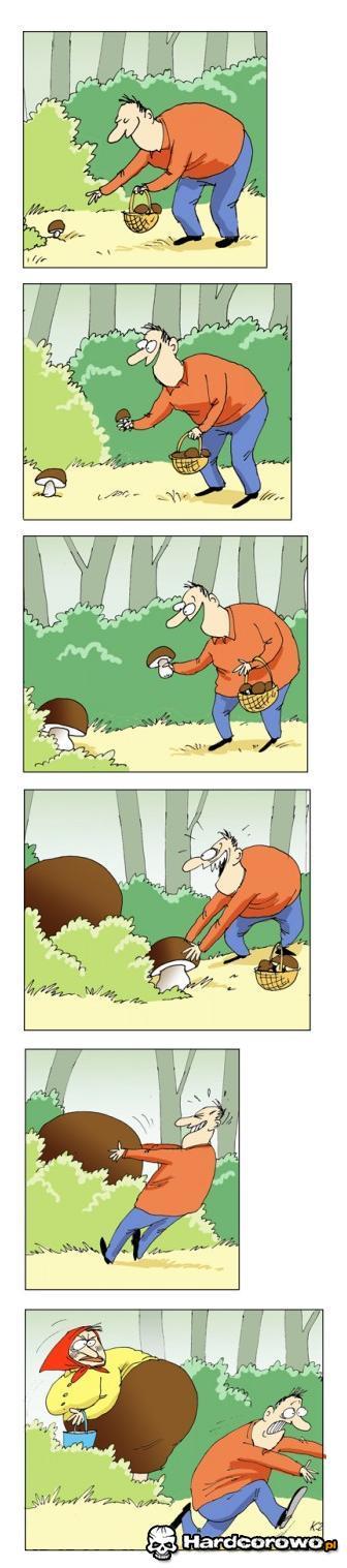 Zbieranie grzybów - 1