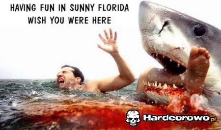 Pozdrowienia z Florydy - 1