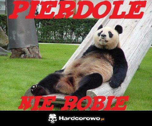 Leniwa panda - 1