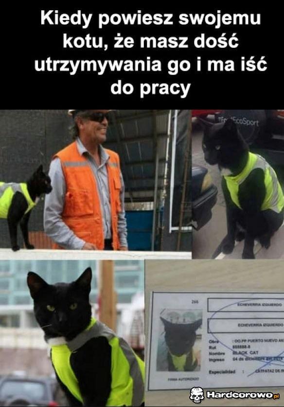 Robotny koteł - 1