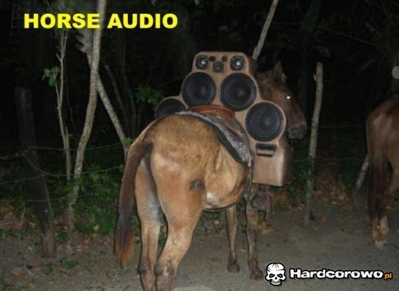 Horse audio - 1