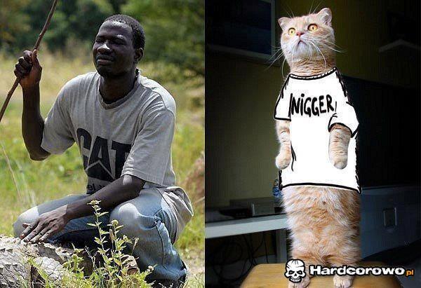 Cat nigger - 1