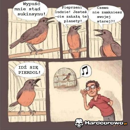 Ptaszek - 1