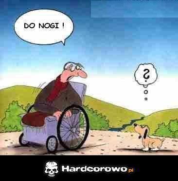 Mądry pies - 1