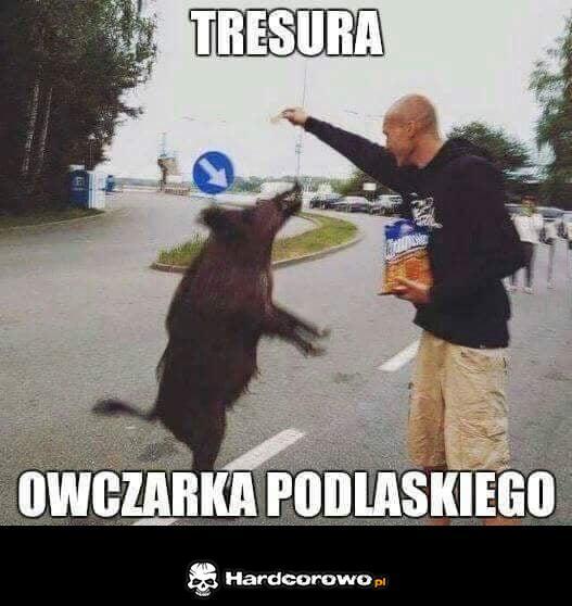 Tresura - 1