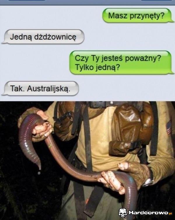 Dżdżownica - 1