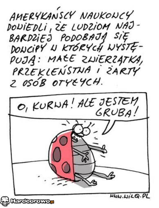 Biedronka - 1