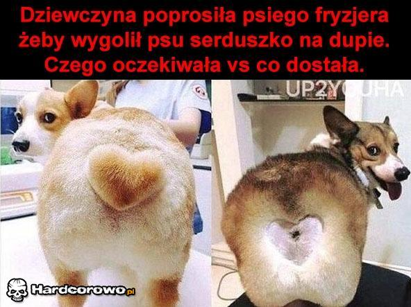 Psi fryzjer - 1