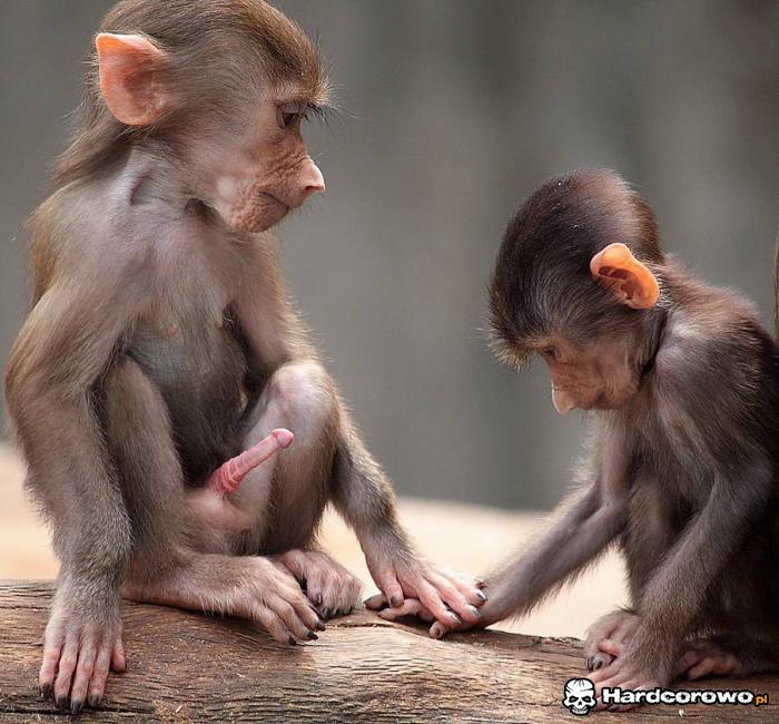 Ssij małpo - 1