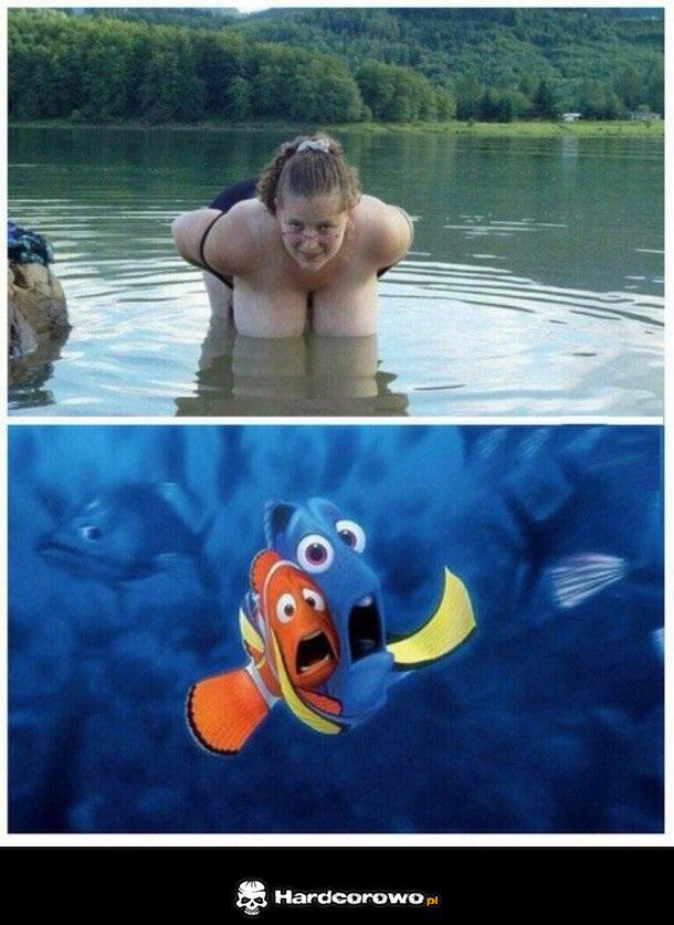 Przestraszone rybki - 1