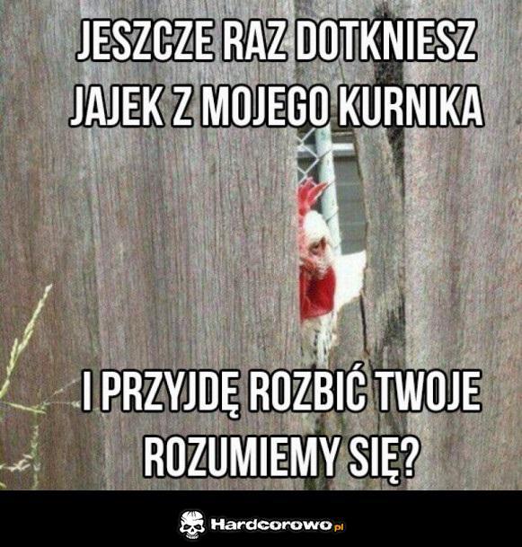 Wkurwiony kogut - 1