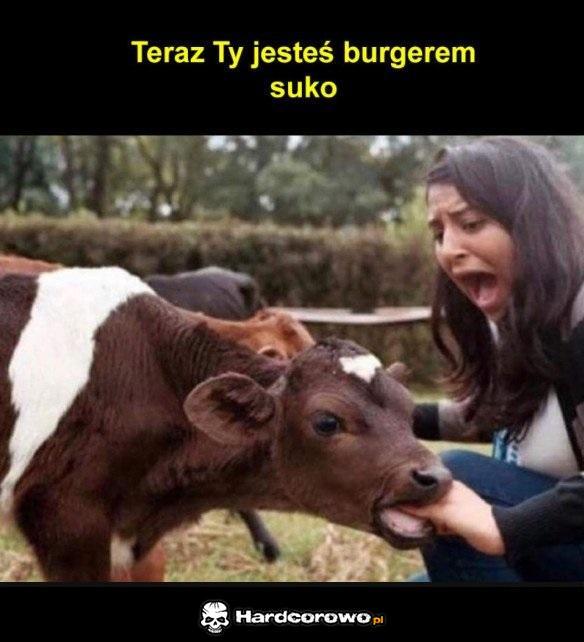 Zemsta krowy - 1