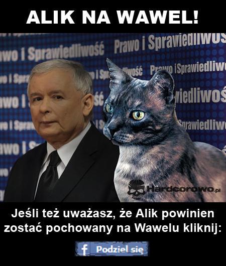 Alik na Wawel! - 1