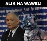 Alik na Wawel!