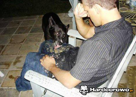 Pies je pawia - 1