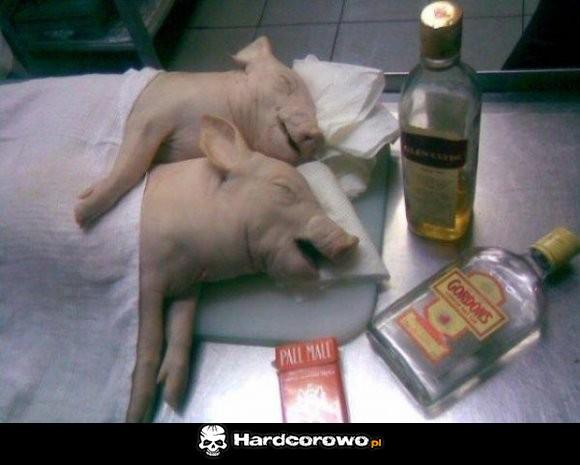 Uchlane świnie - 1