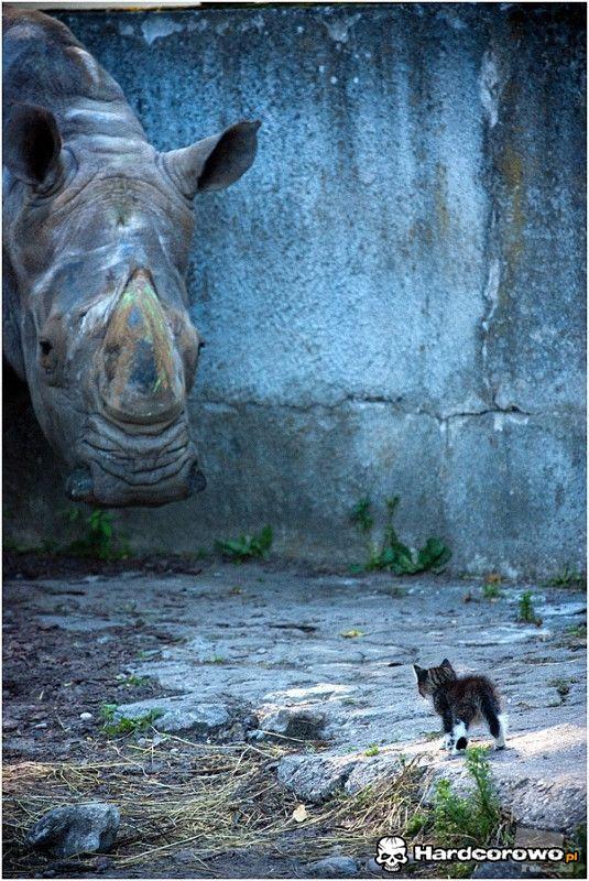 Kotek i nosorożec - 1