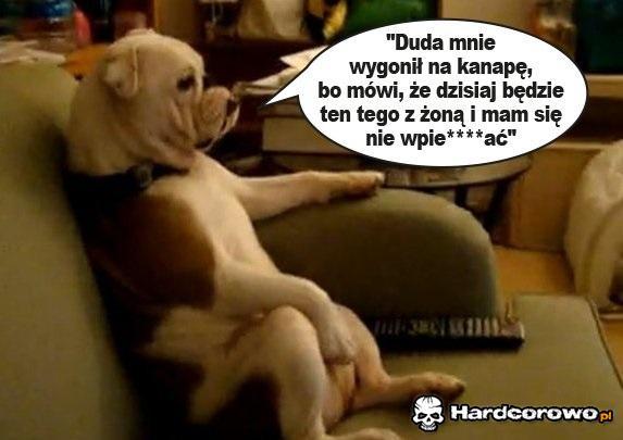 Pies Piotra Dudy, Kacperek - 1