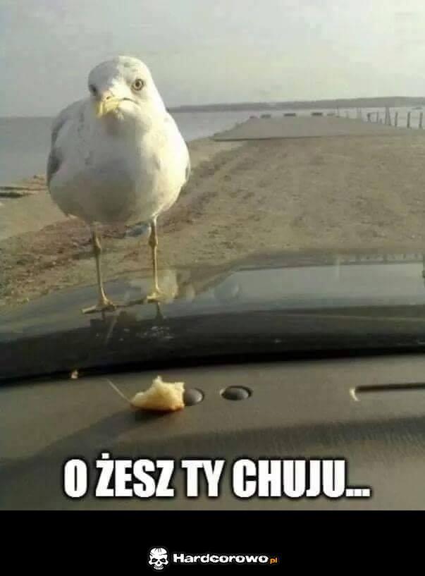 Chlebek - 1