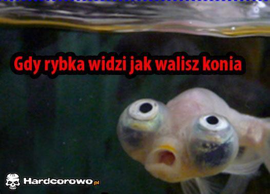 Biedna rybka - 1