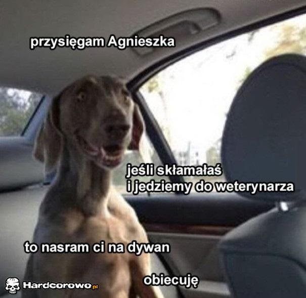 Pies w panice - 1
