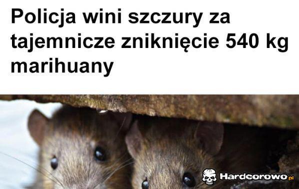 Szczury ćpuny - 1