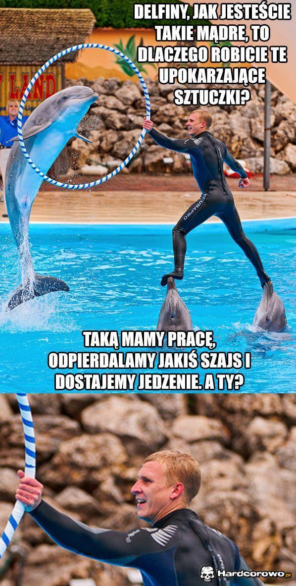 Delfiny - 1