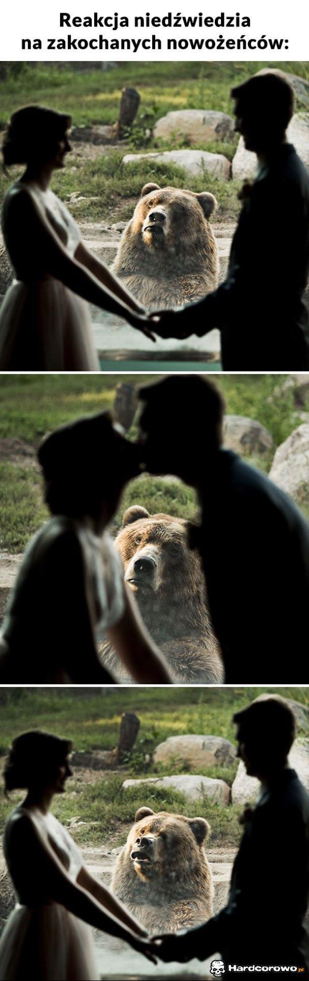 Reakcja niedźwiedzia - 1