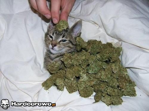 Ten kot ma bardziej zajebiste życie niż Ty! - 1