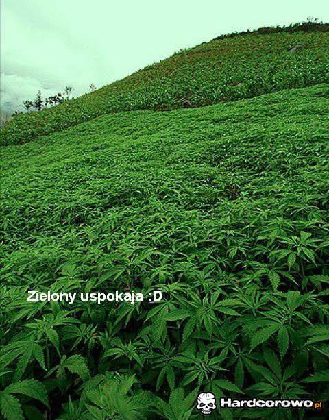 Zielony uspokaja - 1