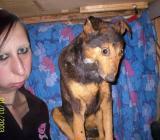 Jaki właściciel taki pies